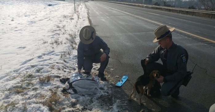 new-york-state-police-dogs-dumped